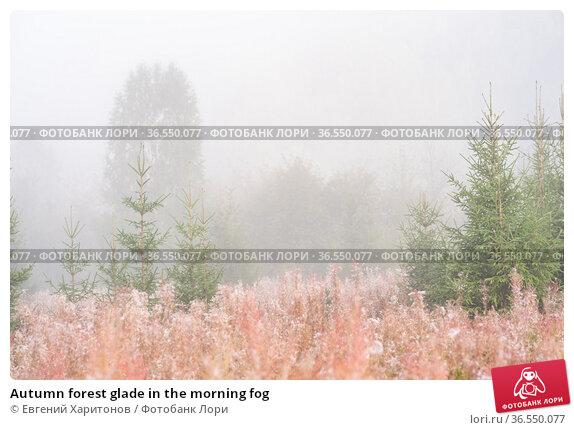 Autumn forest glade in the morning fog. Стоковое фото, фотограф Евгений Харитонов / Фотобанк Лори