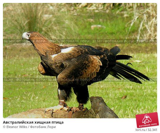 Купить «Австралийская хищная птица», фото № 32341, снято 19 июня 2006 г. (c) Eleanor Wilks / Фотобанк Лори