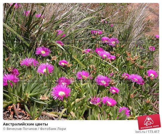 Австралийские цветы, фото № 173417, снято 8 октября 2006 г. (c) Вячеслав Потапов / Фотобанк Лори