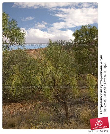 Австралийский кустарниковый буш, фото № 186333, снято 13 октября 2006 г. (c) Вячеслав Потапов / Фотобанк Лори