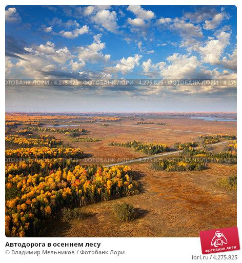 Автодорога в осеннем лесу, фото № 4275825, снято 8 сентября 2011 г. (c) Владимир Мельников / Фотобанк Лори