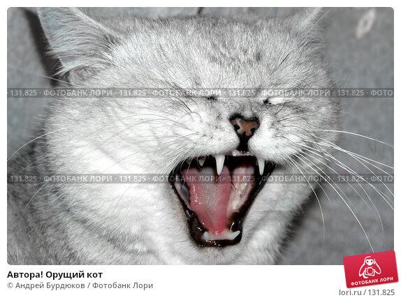 Автора! Орущий кот, фото № 131825, снято 19 сентября 2006 г. (c) Андрей Бурдюков / Фотобанк Лори
