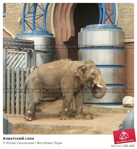 Азиатский слон, фото № 296449, снято 2 мая 2008 г. (c) Юлия Смольская / Фотобанк Лори