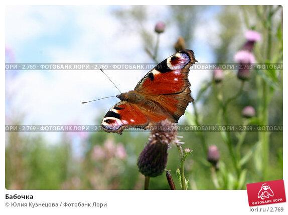 Бабочка, фото № 2769, снято 30 марта 2017 г. (c) Юлия Кузнецова / Фотобанк Лори
