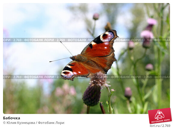 Бабочка, фото № 2769, снято 22 октября 2016 г. (c) Юлия Кузнецова / Фотобанк Лори