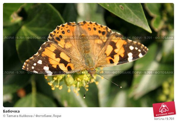 Бабочка, фото № 9701, снято 23 сентября 2006 г. (c) Tamara Kulikova / Фотобанк Лори
