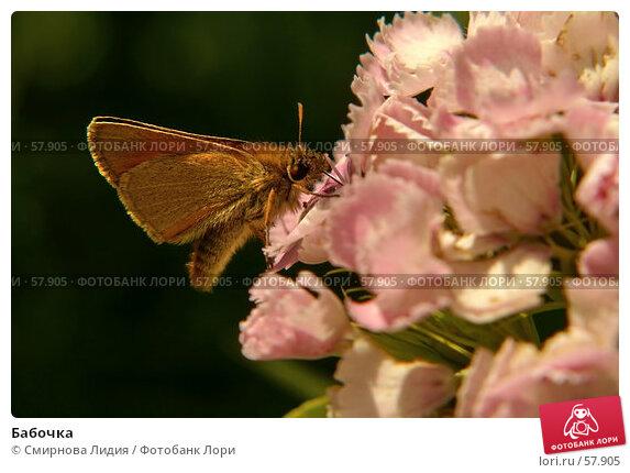 Бабочка, фото № 57905, снято 1 июля 2007 г. (c) Смирнова Лидия / Фотобанк Лори
