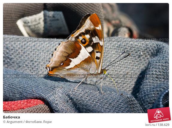 Бабочка, фото № 138629, снято 8 июля 2006 г. (c) Argument / Фотобанк Лори