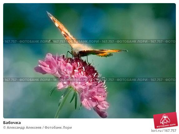 Бабочка, эксклюзивное фото № 167757, снято 8 сентября 2007 г. (c) Александр Алексеев / Фотобанк Лори