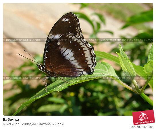 Бабочка, фото № 168185, снято 3 сентября 2007 г. (c) Устинов Геннадий / Фотобанк Лори