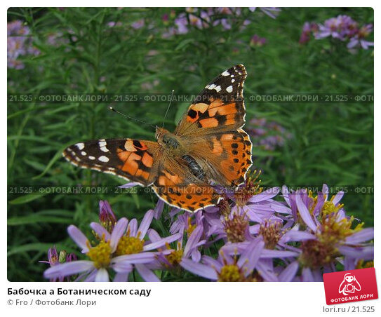 Бабочка а Ботаническом саду, фото № 21525, снято 7 августа 2005 г. (c) Fro / Фотобанк Лори