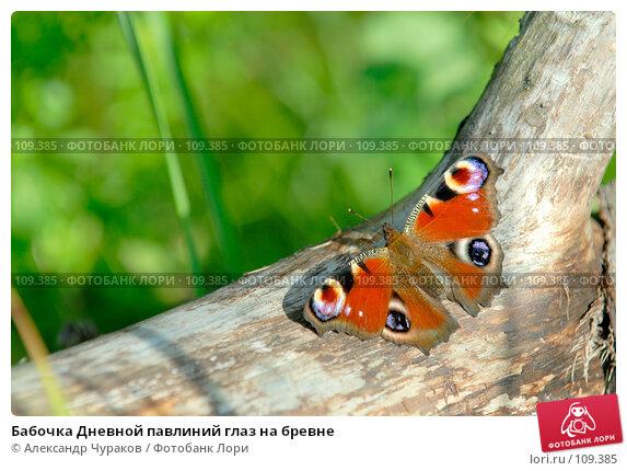 Бабочка Дневной павлиний глаз на бревне, фото № 109385, снято 8 августа 2006 г. (c) Александр Чураков / Фотобанк Лори