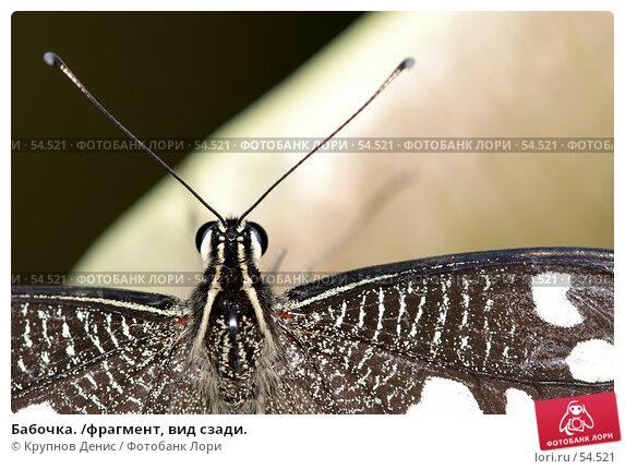 Бабочка. /фрагмент, вид сзади., фото № 54521, снято 15 мая 2007 г. (c) Крупнов Денис / Фотобанк Лори