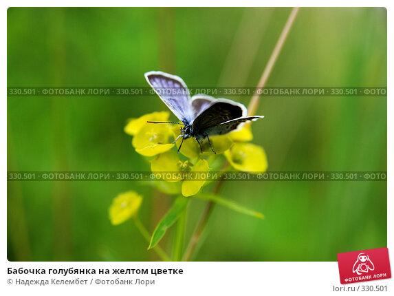 Бабочка голубянка на желтом цветке, фото № 330501, снято 13 июня 2008 г. (c) Надежда Келембет / Фотобанк Лори