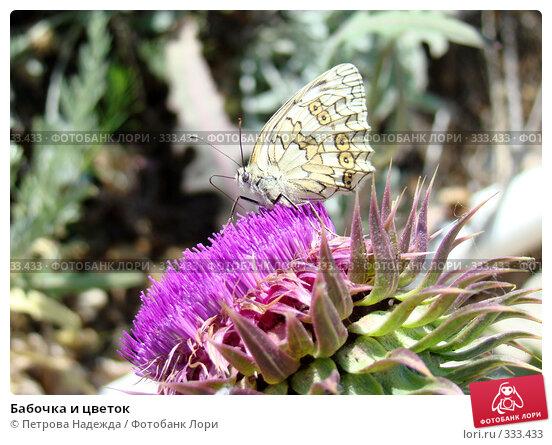Бабочка и цветок, фото № 333433, снято 22 июня 2008 г. (c) Петрова Надежда / Фотобанк Лори