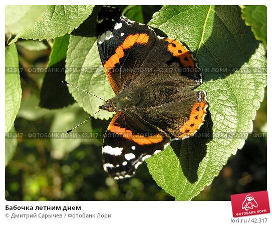 Бабочка летним днем, фото № 42317, снято 17 сентября 2006 г. (c) Дмитрий Сарычев / Фотобанк Лори