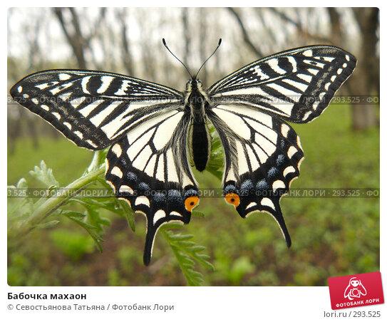 Купить «Бабочка махаон», фото № 293525, снято 1 мая 2008 г. (c) Севостьянова Татьяна / Фотобанк Лори