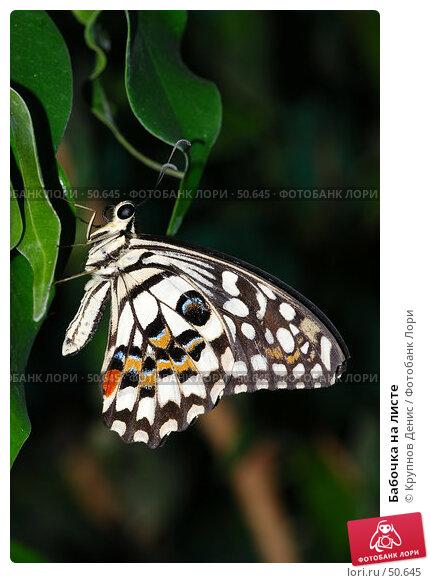 Бабочка на листе, фото № 50645, снято 7 мая 2007 г. (c) Крупнов Денис / Фотобанк Лори