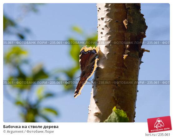 Бабочка на стволе дерева, фото № 235061, снято 10 августа 2007 г. (c) Argument / Фотобанк Лори
