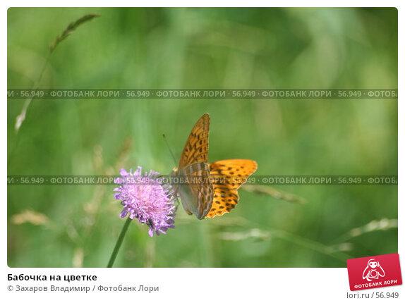 Бабочка на цветке, фото № 56949, снято 1 июля 2007 г. (c) Захаров Владимир / Фотобанк Лори