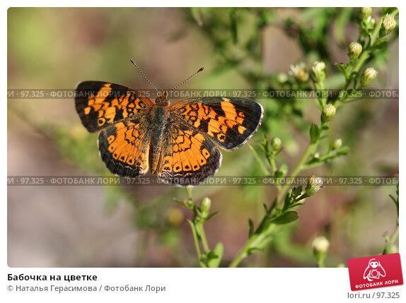Бабочка на цветке, фото № 97325, снято 2 сентября 2007 г. (c) Наталья Герасимова / Фотобанк Лори