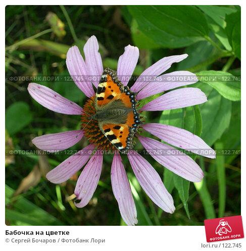 Бабочка на цветке, фото № 122745, снято 28 августа 2004 г. (c) Сергей Бочаров / Фотобанк Лори