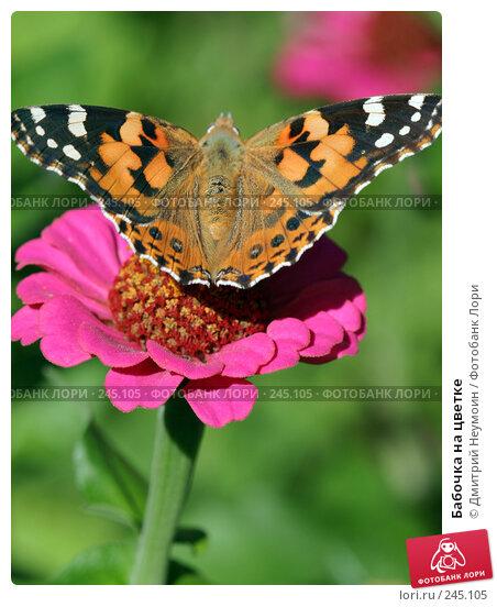 Бабочка на цветке, эксклюзивное фото № 245105, снято 7 сентября 2004 г. (c) Дмитрий Неумоин / Фотобанк Лори