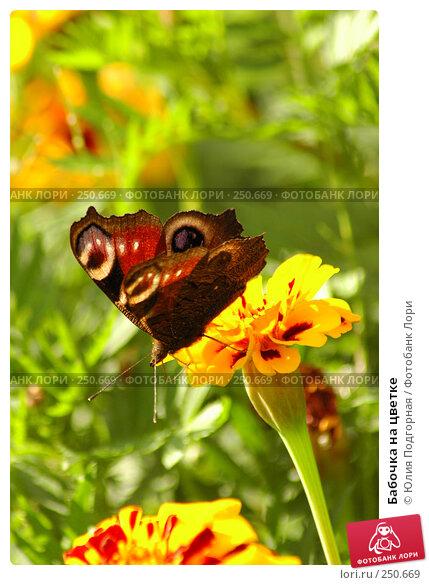Бабочка на цветке, фото № 250669, снято 19 августа 2005 г. (c) Юлия Селезнева / Фотобанк Лори