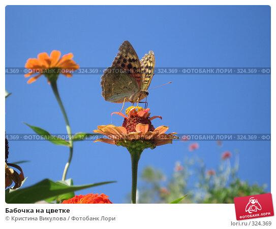 Бабочка на цветке, фото № 324369, снято 13 сентября 2007 г. (c) Кристина Викулова / Фотобанк Лори