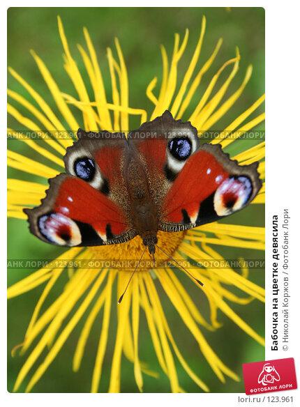 Купить «Бабочка на цветке девясила», фото № 123961, снято 7 августа 2006 г. (c) Николай Коржов / Фотобанк Лори
