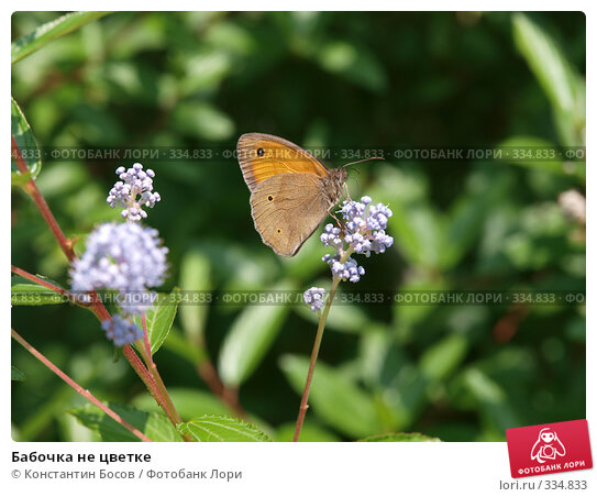 Бабочка не цветке, фото № 334833, снято 30 апреля 2017 г. (c) Константин Босов / Фотобанк Лори