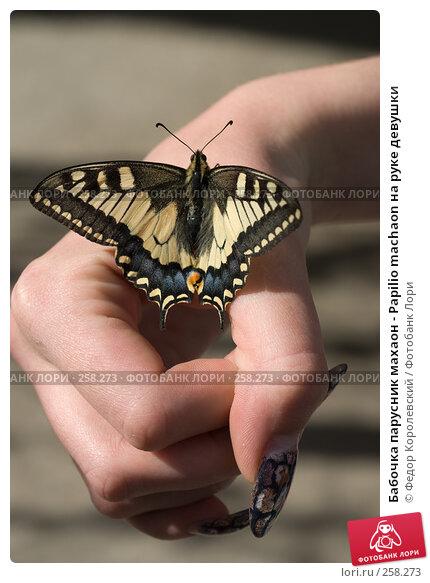 Бабочка парусник махаон - Papilio machaon на руке девушки, фото № 258273, снято 21 апреля 2008 г. (c) Федор Королевский / Фотобанк Лори