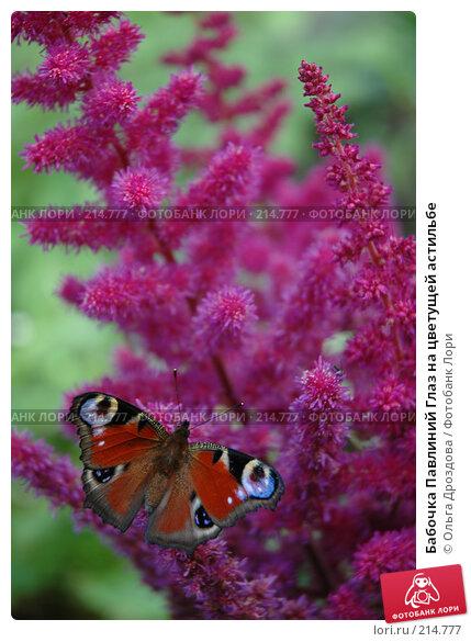 Бабочка Павлиний Глаз на цветущей астильбе, фото № 214777, снято 30 июля 2005 г. (c) Ольга Дроздова / Фотобанк Лори