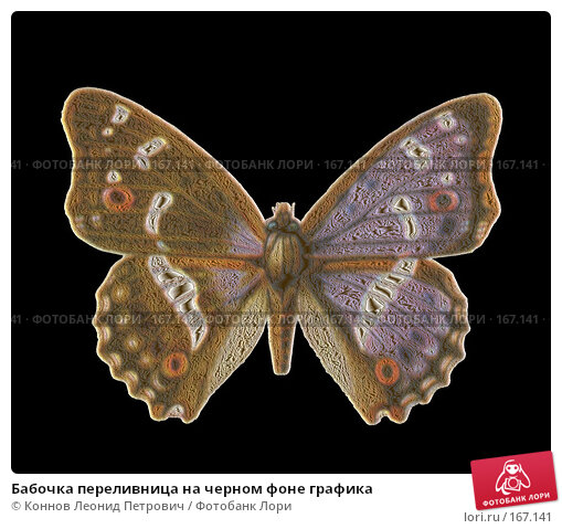 Бабочка переливница на черном фоне графика, иллюстрация № 167141 (c) Коннов Леонид Петрович / Фотобанк Лори