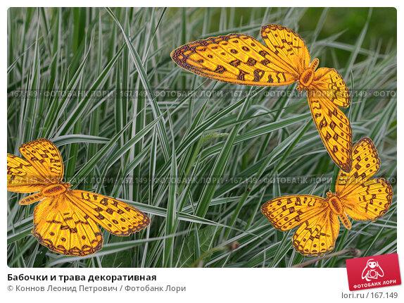 Бабочки и трава декоративная, фото № 167149, снято 27 мая 2007 г. (c) Коннов Леонид Петрович / Фотобанк Лори