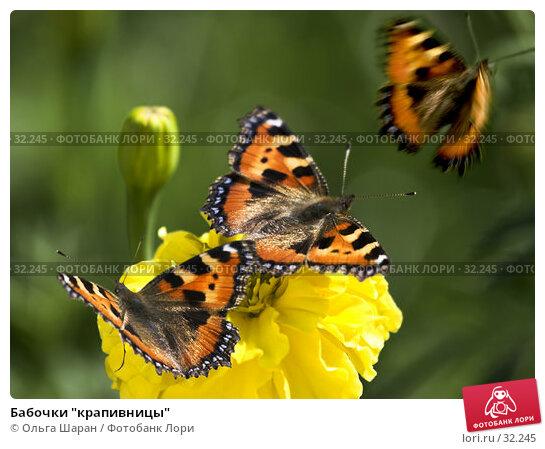 "Бабочки ""крапивницы"", фото № 32245, снято 29 августа 2006 г. (c) Ольга Шаран / Фотобанк Лори"