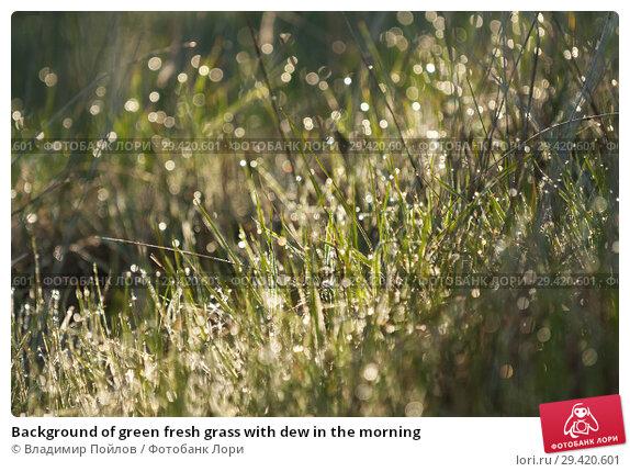 Купить «Background of green fresh grass with dew in the morning», фото № 29420601, снято 24 апреля 2019 г. (c) Владимир Пойлов / Фотобанк Лори