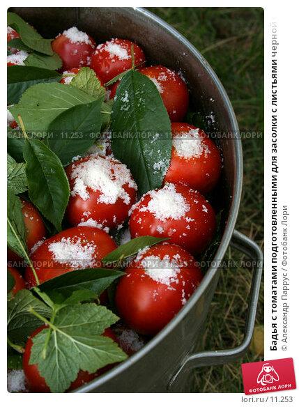 Бадья с томатами подготовленными для засолки с листьями черной смородины и вишни, фото № 11253, снято 27 августа 2006 г. (c) Александр Паррус / Фотобанк Лори