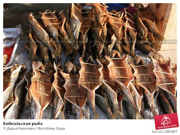 Купить «Байкальская рыба», фото № 209861, снято 18 декабря 2007 г. (c) Дарья Киселева / Фотобанк Лори