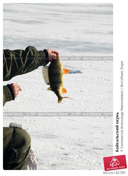 Байкальский окунь, фото № 33797, снято 18 марта 2007 г. (c) Саломатов Александр Николаевич / Фотобанк Лори