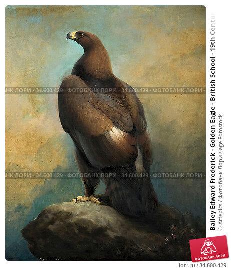 Bailey Edward Frederick - Golden Eagle - British School - 19th Century... Стоковое фото, фотограф Artepics / age Fotostock / Фотобанк Лори