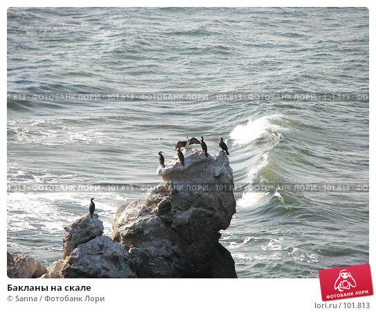 Бакланы на скале, фото № 101813, снято 12 сентября 2007 г. (c) Sanna / Фотобанк Лори
