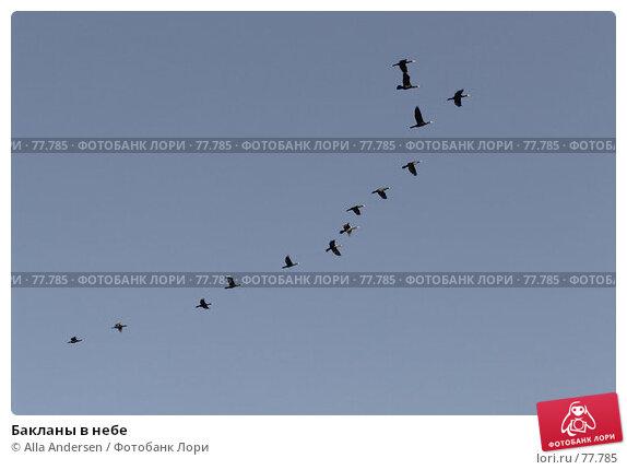 Бакланы в небе, фото № 77785, снято 10 мая 2006 г. (c) Alla Andersen / Фотобанк Лори