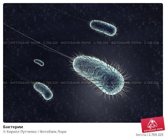 Купить «Бактерии», иллюстрация № 2769325 (c) Кирилл Путченко / Фотобанк Лори