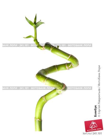 Бамбук, фото № 241101, снято 21 марта 2008 г. (c) Сергей Лаврентьев / Фотобанк Лори