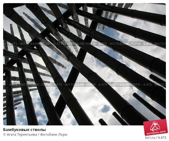 Бамбуковые стволы, фото № 4473, снято 21 мая 2006 г. (c) Агата Терентьева / Фотобанк Лори