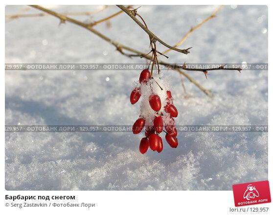 Барбарис под снегом, фото № 129957, снято 1 декабря 2005 г. (c) Serg Zastavkin / Фотобанк Лори