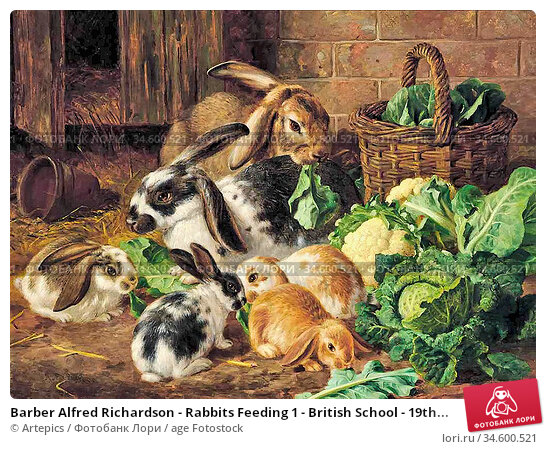Barber Alfred Richardson - Rabbits Feeding 1 - British School - 19th... Стоковое фото, фотограф Artepics / age Fotostock / Фотобанк Лори