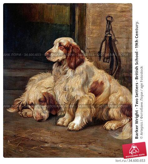Barker Wright - Two Setters - British School - 19th Century. Стоковое фото, фотограф Artepics / age Fotostock / Фотобанк Лори