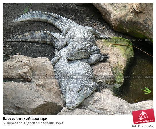 Барселонский зоопарк, эксклюзивное фото № 45557, снято 21 сентября 2006 г. (c) Журавлев Андрей / Фотобанк Лори